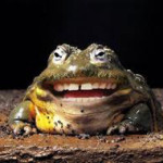 naturesdental dr olga isaeva frog-smiling