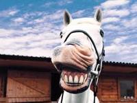 naturesdental dr olga isaeva Horse smiling